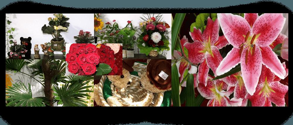 Alexandria | Floraria Garden Flowers