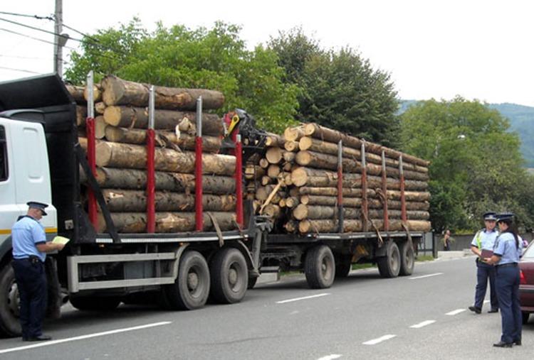 contrabanda lemne