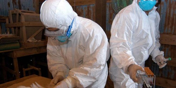 Două noi focare de gripa AVIARĂ în Teleorman