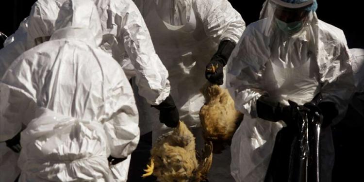 ALERTĂ! 26 de focare de gripă aviară la Dracea iar alte 14 localităţi din zonă sunt monitorizate