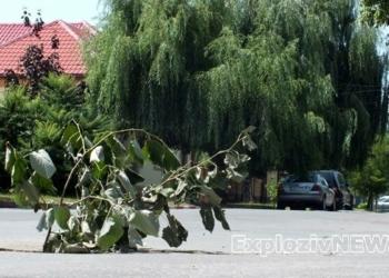 Un copac a răsărit din asfalt în Alexandria