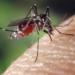 Primul caz de infecție cu virusul West Nile, confirmat în Teleorman