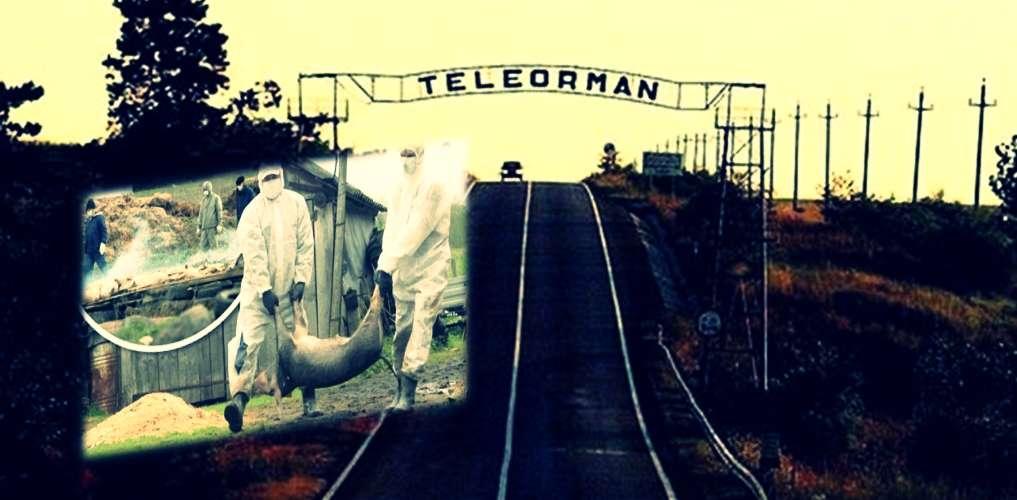 Alertă în Teleorman! Primul caz de pestă porcină confirmat în judeţ