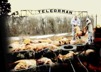 Pesta porcină, greu de învins. Focar descoperit in comuna Scrioaștea